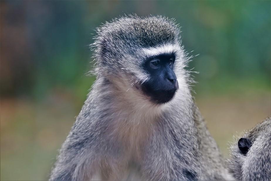 2018 07 29 177 Columbus Zoo.jpg