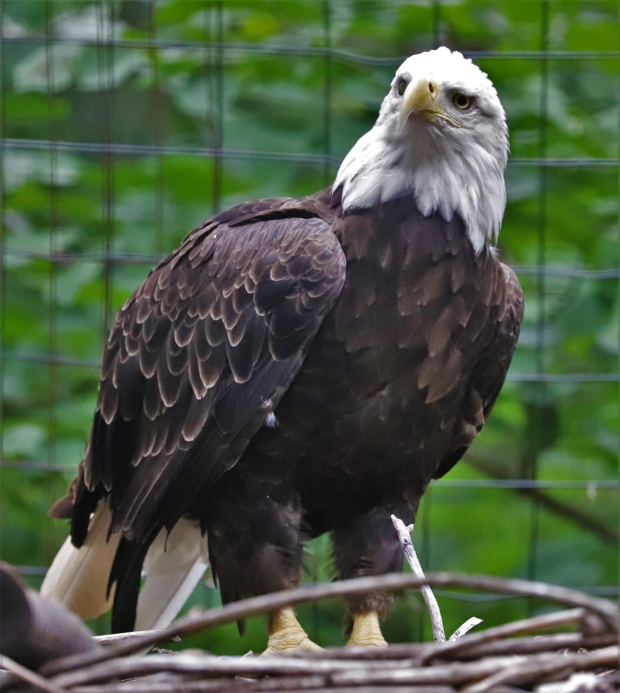 2018 07 29 190 Columbus Zoo.jpg