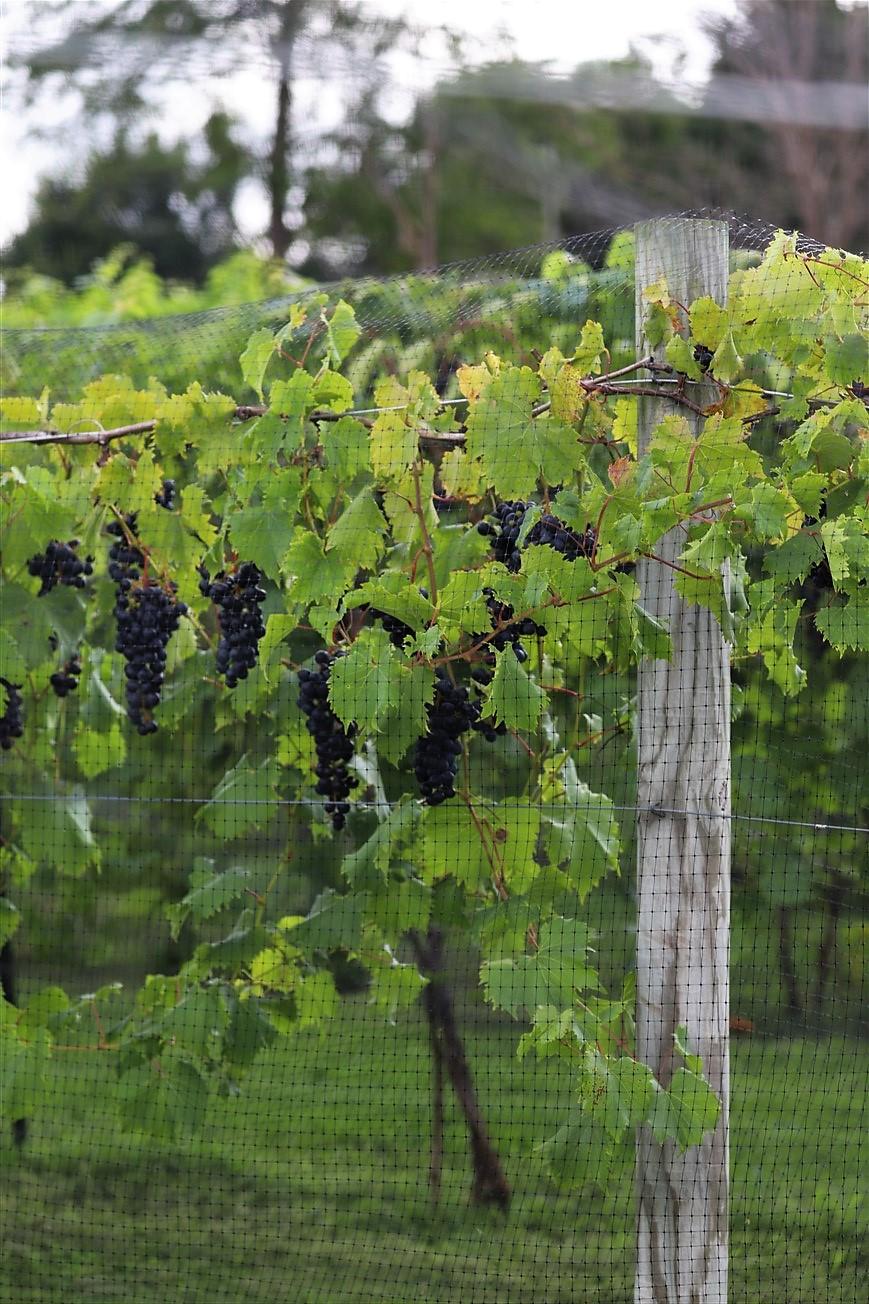 2018 08 18 29 Lancaster OH Rockside Winery.jpg