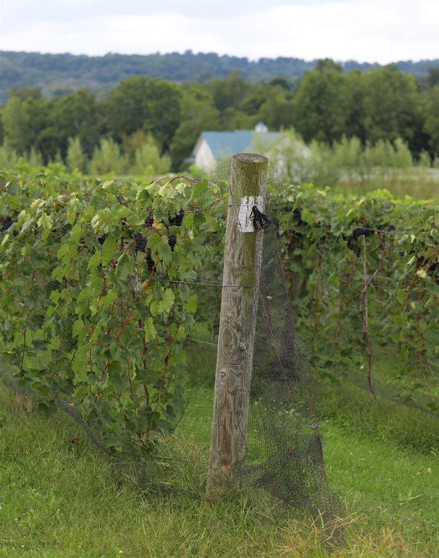 2018 08 18 60 Lancaster OH Rockside Winery.jpg