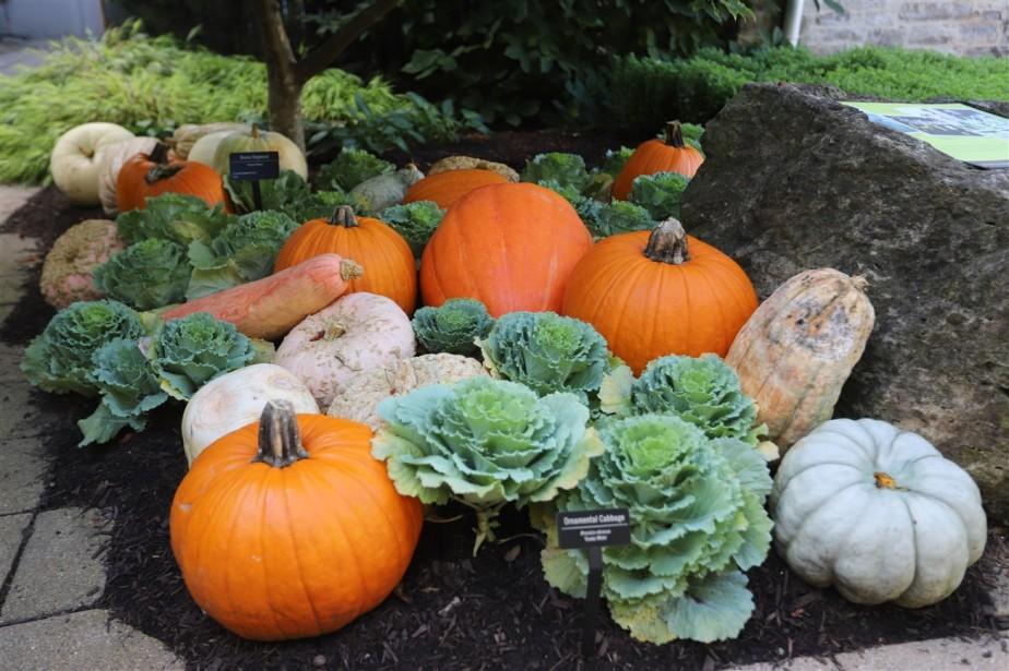 2018 09 30 35 Columbus Franklin Park Fall Display.jpg