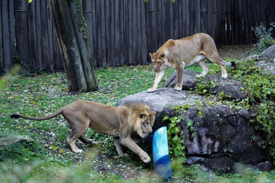 2018 11 03 102 Cleveland Zoo.jpg