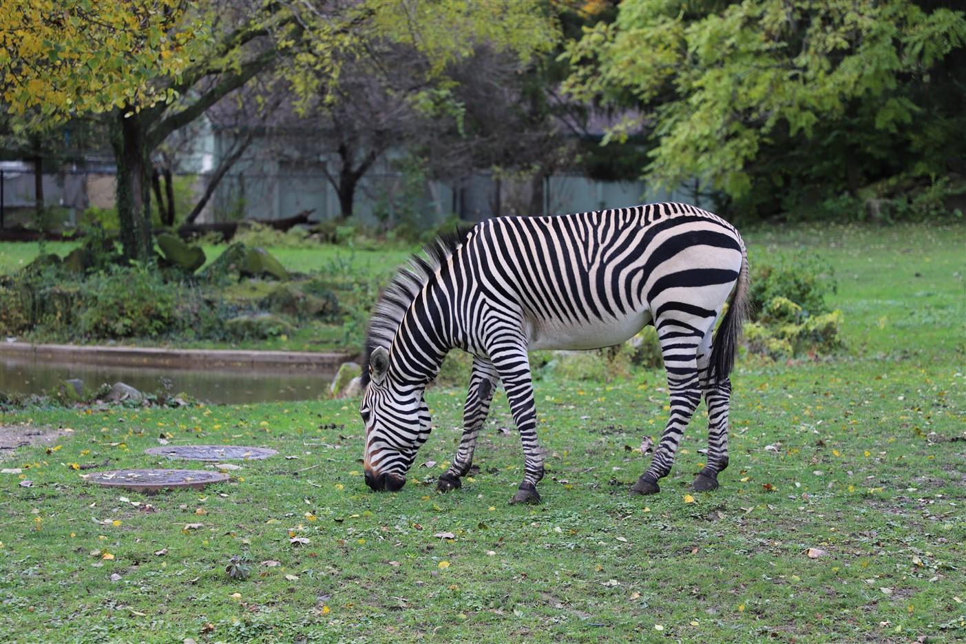 2018 11 03 103 Cleveland Zoo.jpg