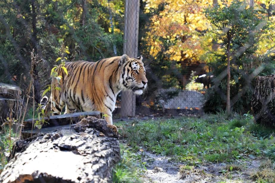 2018 11 03 114 Cleveland Zoo.jpg