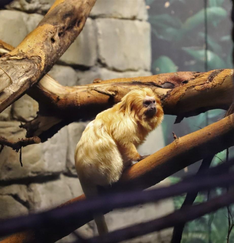 2018 11 03 2 Cleveland Zoo.jpg