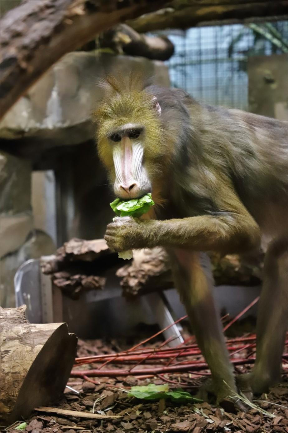 2018 11 03 68 Cleveland Zoo.jpg