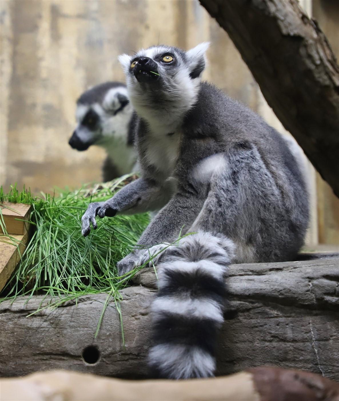 2018 11 03 74 Cleveland Zoo.jpg