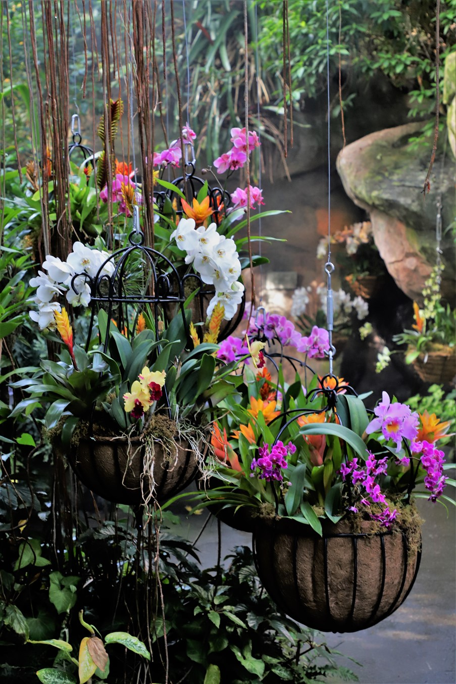 Cleveland – February 2019 – Orchid Show