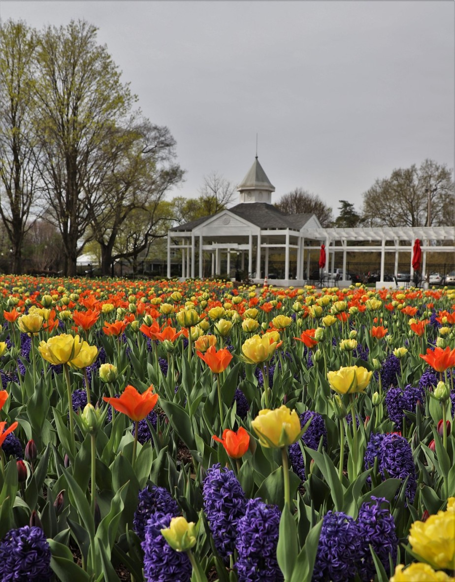 Columbus – April 2019 – Spring Blooms at the Conservatory