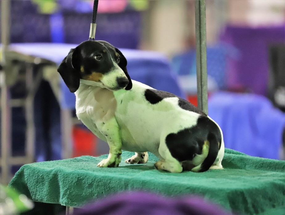 Columbus – April 2019 – The Dog Show Returns