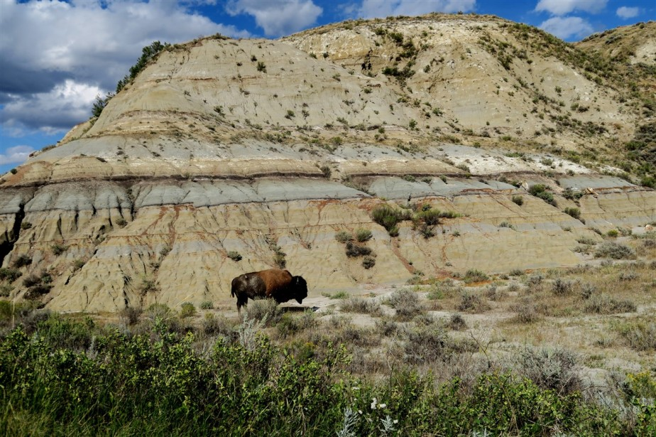 2015 09 08 108 Theodore Roosevelt National Park ND