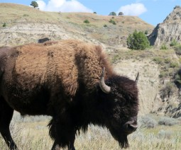 2015 09 08 62 Theodore Roosevelt National Park ND