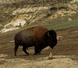 2015 09 08 76 Theodore Roosevelt National Park ND