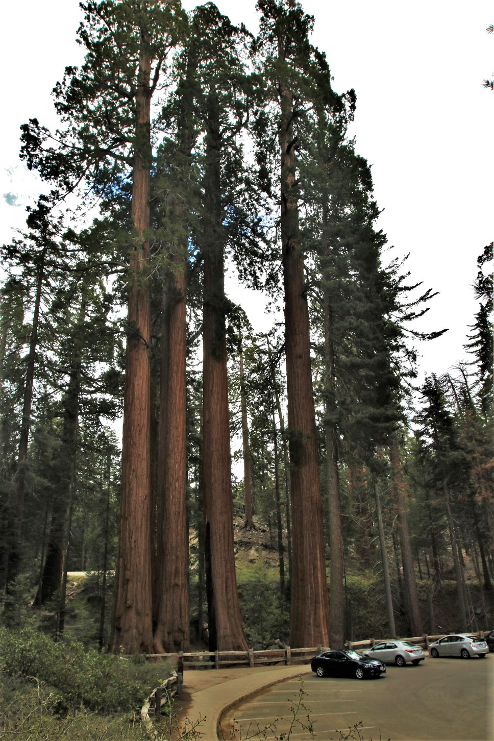 2016 05 23 41 Sequoia Kings Canyon.jpg