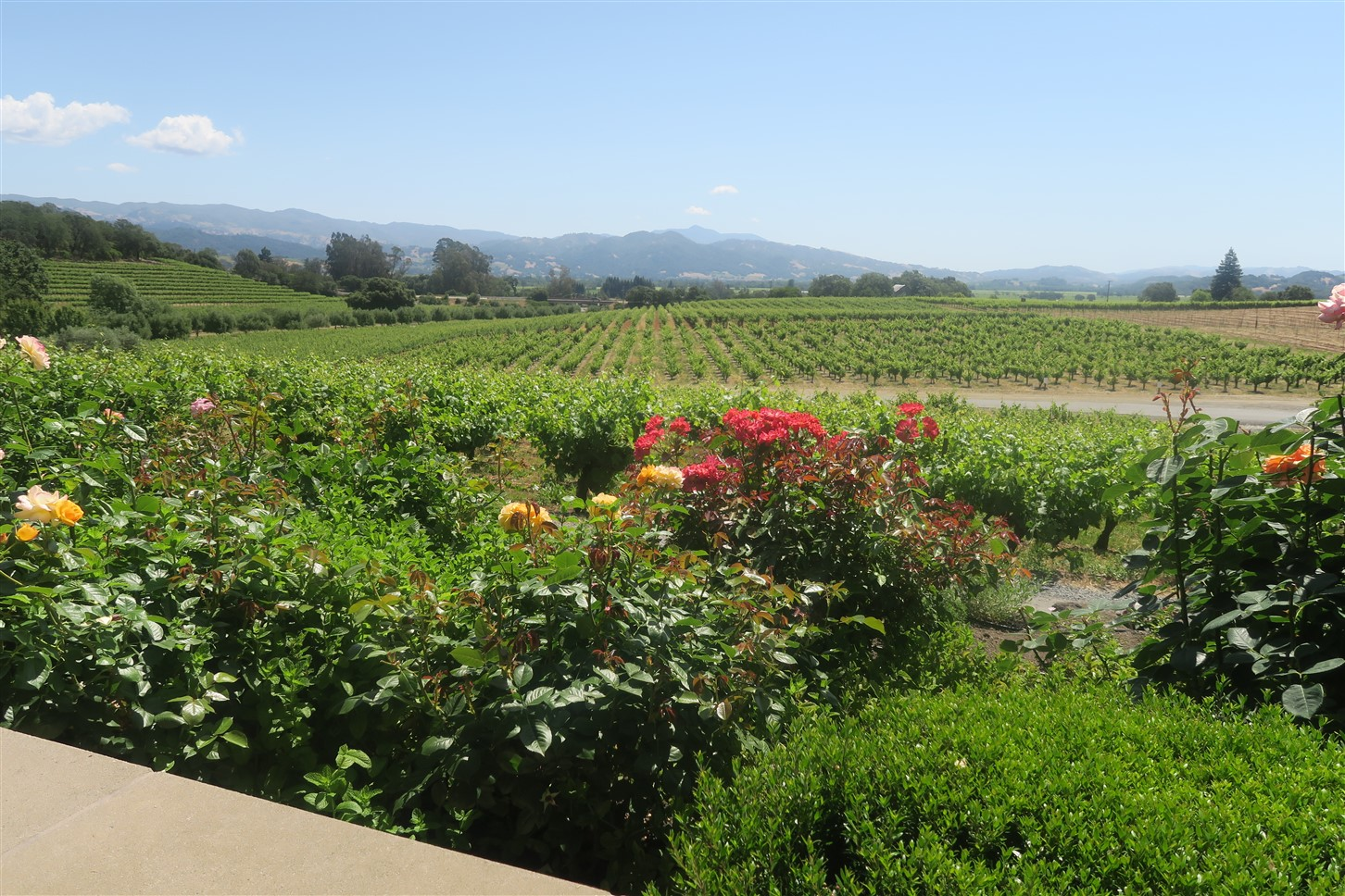 2016 05 26 4 Geyserville CA Coppolla Winery.jpg