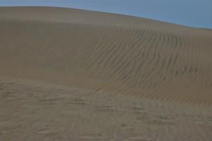 2016 11 09 87 Nags Head NC Jockeys Ridge State Park Sand Dunes