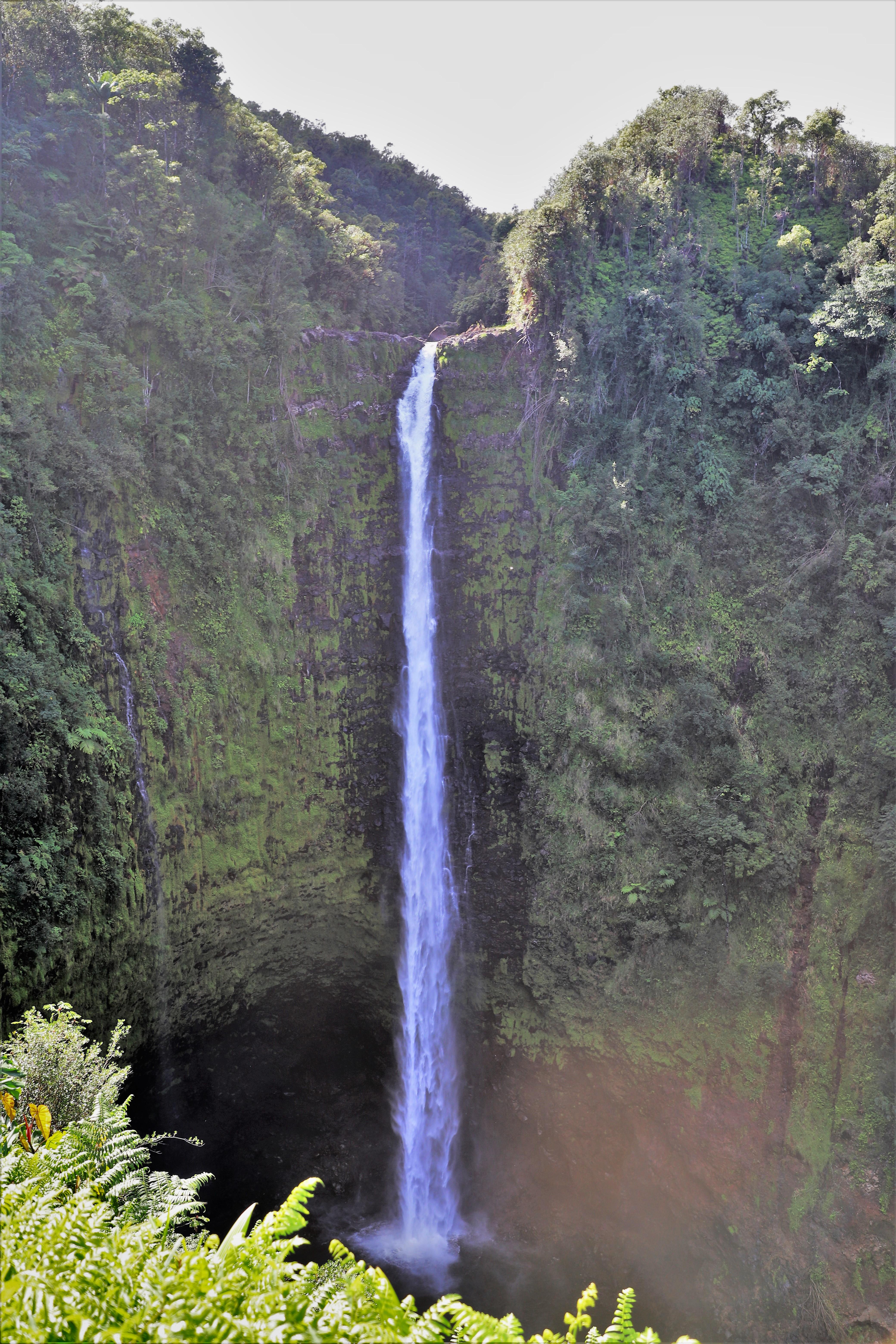 2018 11 15 64 Hilo HI Akaka Falls.JPG