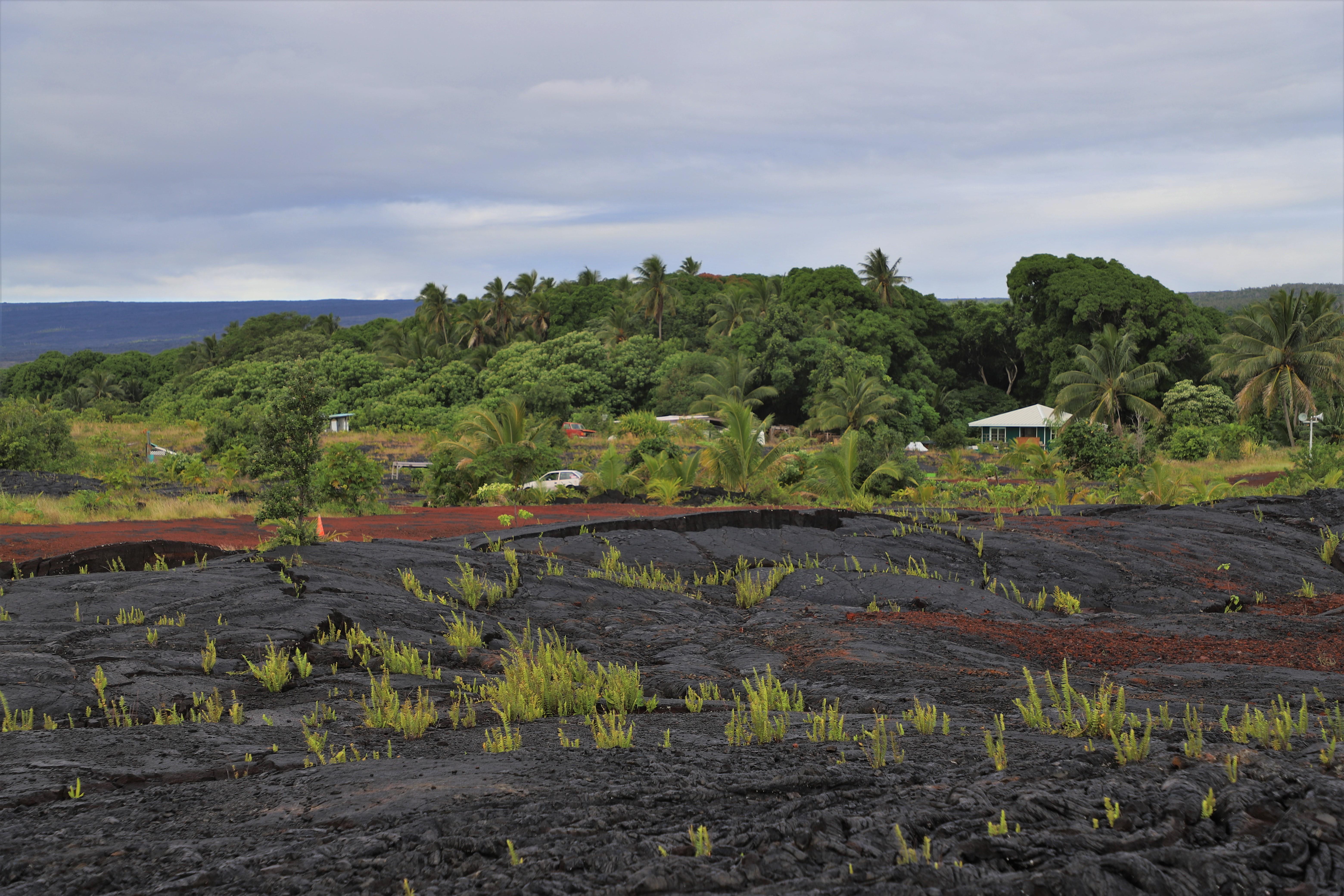 2018 11 15 9 Hilo HI Kaimu Bay Lava Flows.JPG