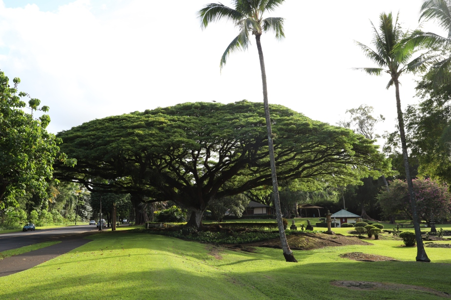 2018 11 15 92 Hilo HI Liliuokalani Gardens.JPG