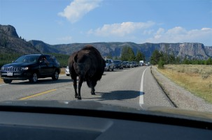 2015 09 13 48 Yellowstone National Park WY