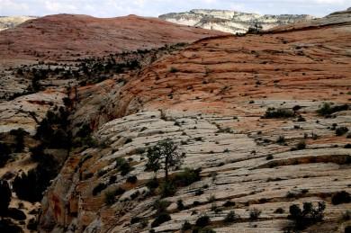 2015 09 16 199 Boulder Mountain UT