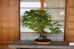 2016 06 03 49 Portland Japanese Gardens