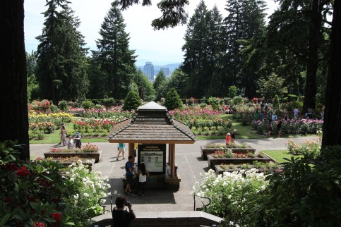 2016 06 03 58 Portland Rose Gardens