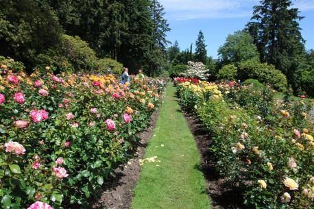 2016 06 03 62 Portland Rose Gardens