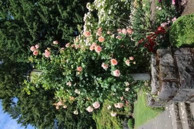 2016 06 03 67 Portland Rose Gardens