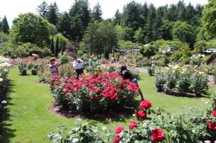 2016 06 03 75 Portland Rose Gardens