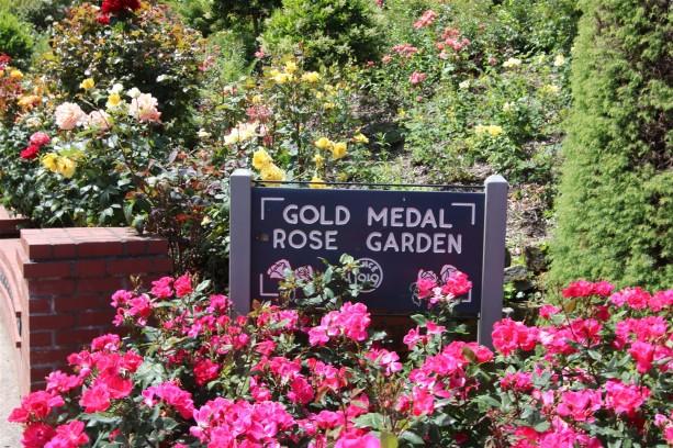 2016 06 03 81 Portland Rose Gardens