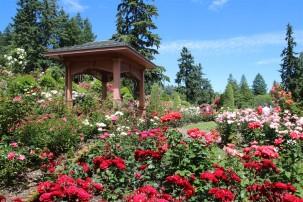 2016 06 03 86 Portland Rose Gardens