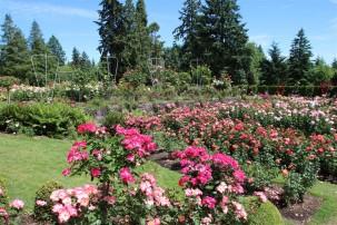 2016 06 03 92 Portland Rose Gardens