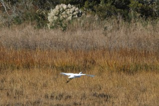 2016 11 07 124 Chincoteague VA