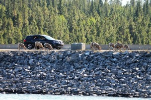 2017 09 04 134 Banff Alberta