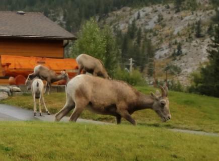 2017 09 04 20 Banff Alberta