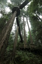 2017 09 08 109 Vancouver Capilano Park - Copy