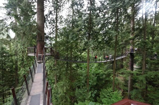 2017 09 08 88 Vancouver Capilano Park - Copy