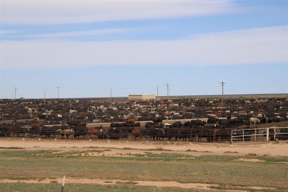 2019 05 28 349 Amarillo TX