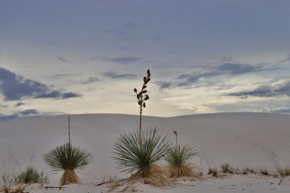 White Sands National Park – August 2021 – AmazingSetting