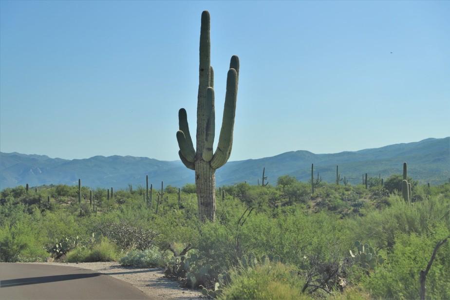 Tucson – August 2021 – Saguaro NationalPark